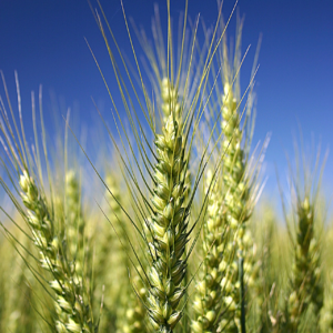dar-tech agricultural chemicals for seed coatings